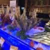 Lạc vào xứ thần tiên – Tiệc bể bơi tại Novotel Ha Long Bay